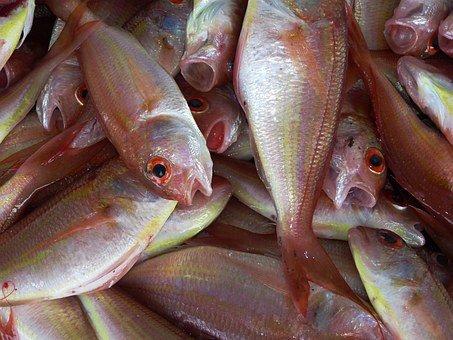 Establish a Company in the Fishing Sector in Dubai