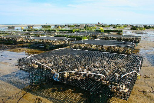 Set Up a Company in the Aquaculture Sector in Dubai